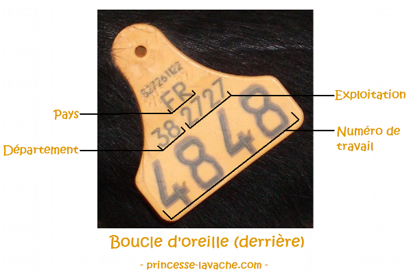 Nom : Boucle_arriere.png Affichages : 1446 Taille : 326,5 Ko