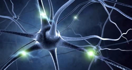 Des chercheurs trouvent un algorithme qui pourrait expliquer l'intelligence humaine et avancer le domaine de l'intelligence artificielle