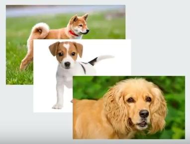 Nom : chiens.jpg Affichages : 1468 Taille : 52,8 Ko