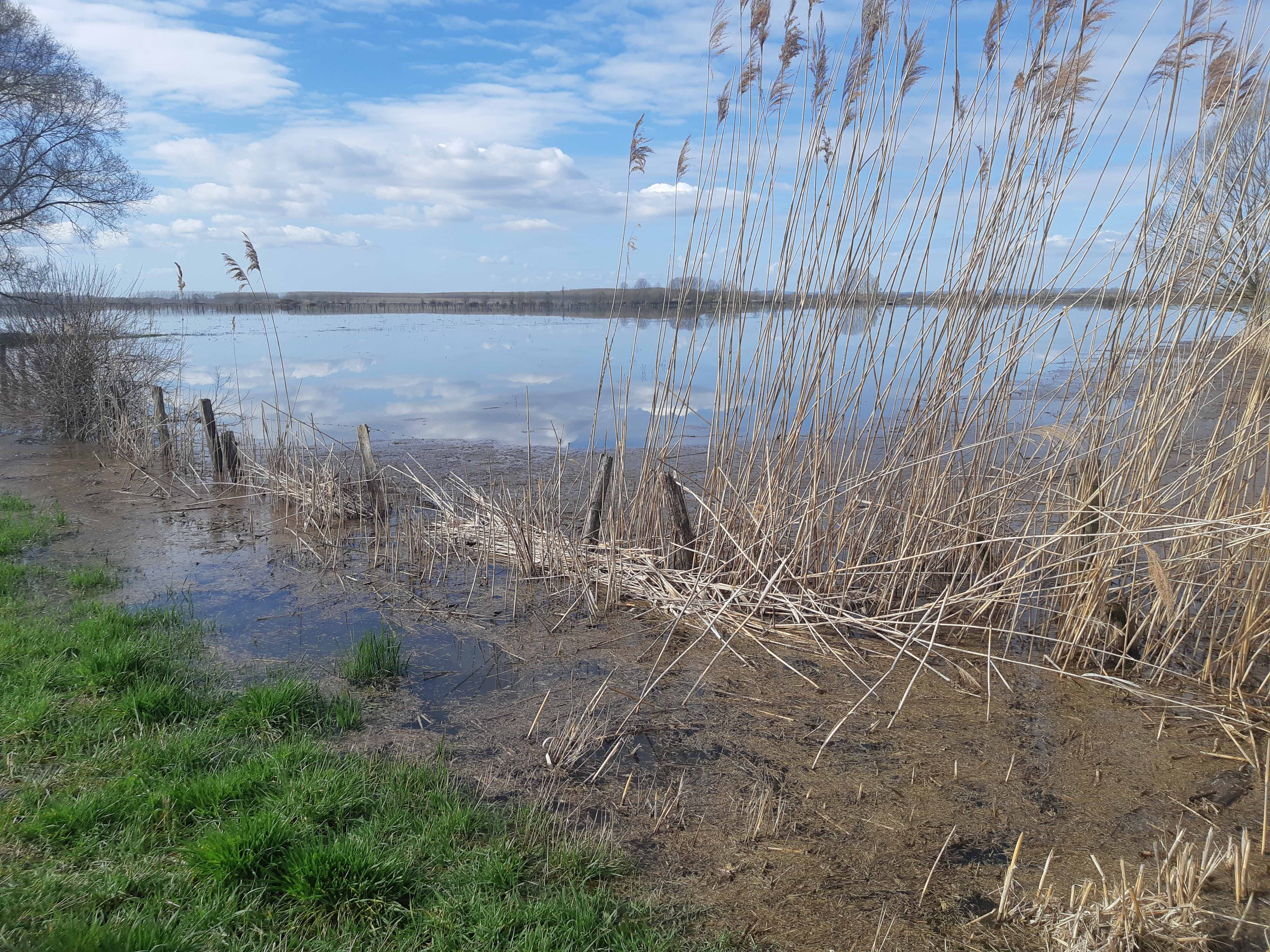 Nom : prairie inondée.jpg Affichages : 746 Taille : 1,72 Mo