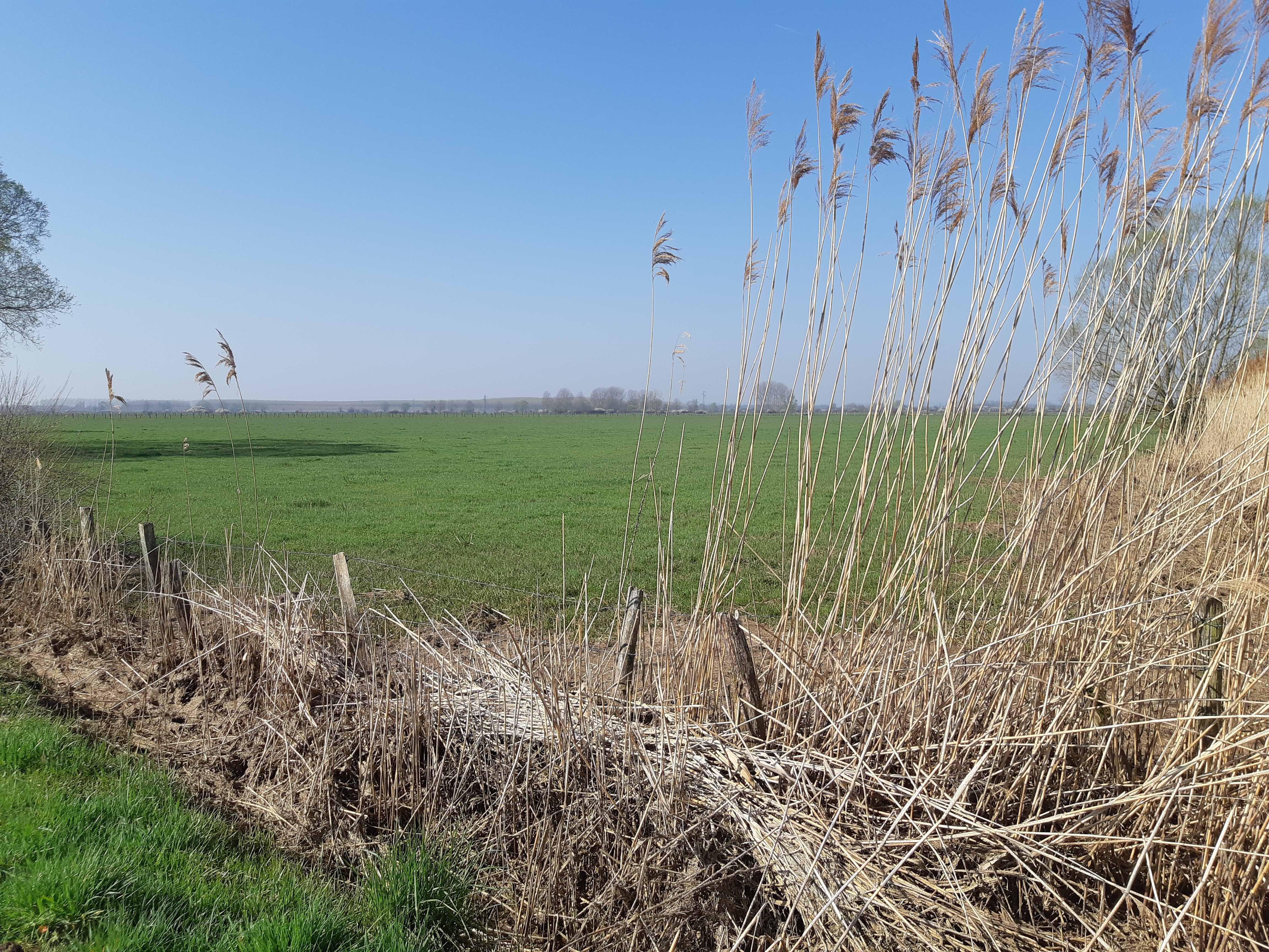 Nom : prairie sèchée.jpg Affichages : 746 Taille : 1,75 Mo