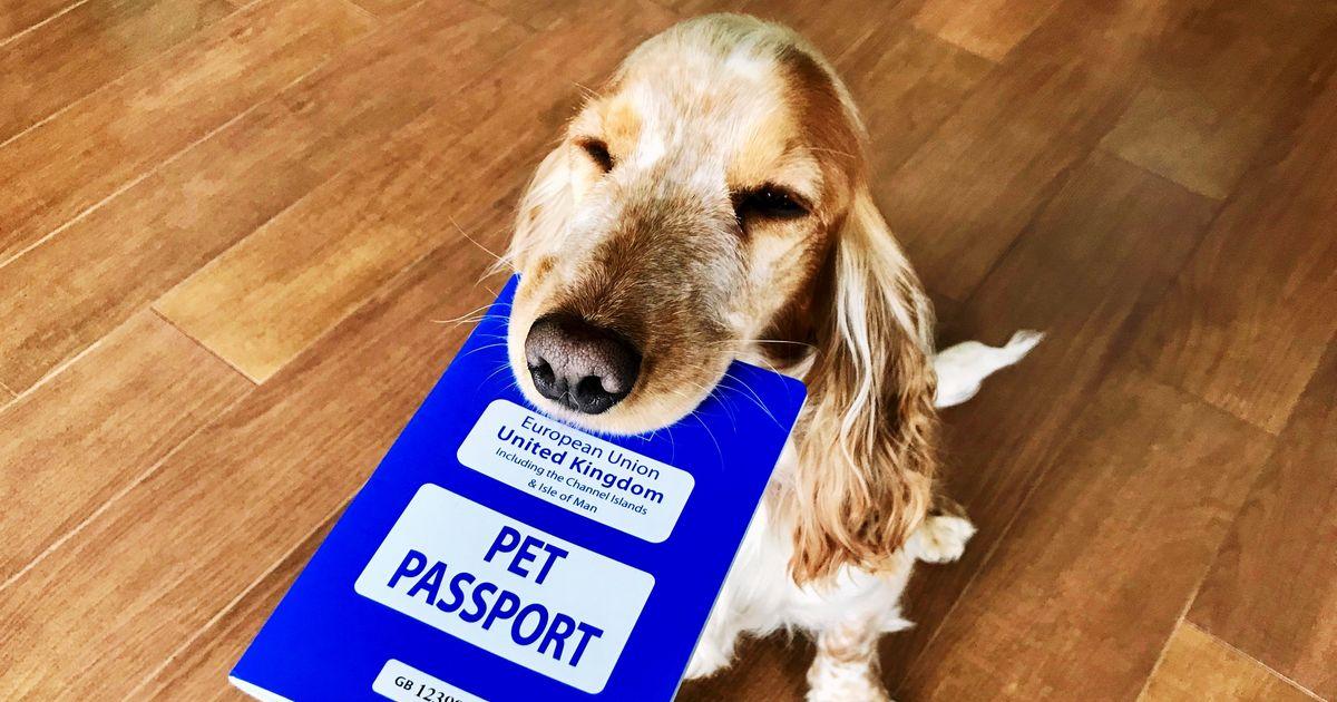 Nom : passeport-chien.jpg Affichages : 1984 Taille : 132,7 Ko