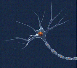 Nom : Neurone1B.png Affichages : 2895 Taille : 147,0 Ko