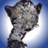 Groupe chargé de la traduction en français de l'EDI Lazarus et du compilateur Free Pascal. Peut s'intéresser aux bibliothèques associées, aux wikis et à tout document utile en relation...