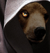 Avatar de osopardo