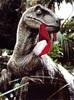 Avatar de raptor70